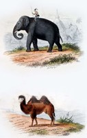Elephant and Camel Fine-Art Print