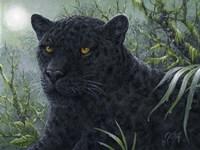 Black Beauty Fine-Art Print