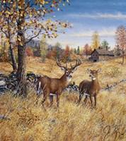 Colors Of Autumn Fine-Art Print