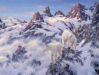 Among The Clouds - Mtn. Goat Fine-Art Print