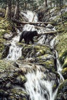 Bear Creek Crossing Fine-Art Print