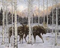 Forest Twilight Fine-Art Print