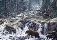 Bear Crossing Fine-Art Print