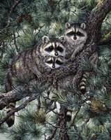 Racoons Fine-Art Print