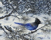 Winter Jay Fine-Art Print