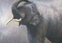 Asian Elephant Dusting Fine-Art Print