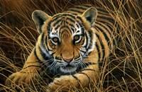 Tiger Cub Fine-Art Print