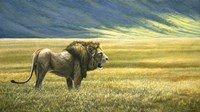 His Domain Lion Fine-Art Print