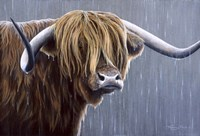 Highland Bull Rainy Day Fine-Art Print