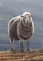 Herdwick Sheep Fine-Art Print