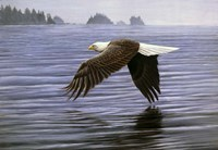 Low Flight Bald Eagle Fine-Art Print