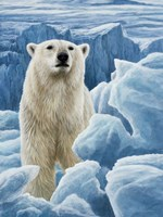 Ice Bear Polar Bear Fine-Art Print