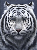 White Tiger Ghost Fine-Art Print