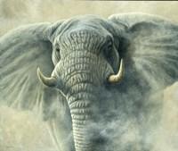 Storm Elephant Fine-Art Print