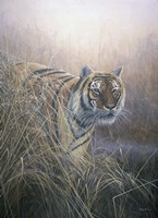 Tiger At Dawn Fine-Art Print