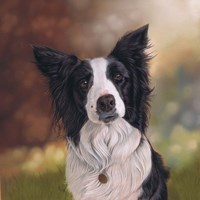 Collie Perdy Fine-Art Print