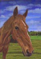 Field Horse Fine-Art Print