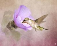 A Taste of Nectar Hummingbird Fine-Art Print