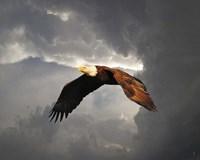 Above The Storm Bald Eagle Fine-Art Print