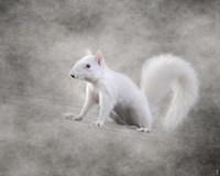 Albino Squirrel Fine-Art Print