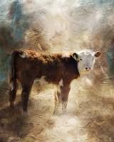 Calf In The Sunday Sun Fine-Art Print