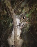 Camera Shy Squirrel Fine-Art Print