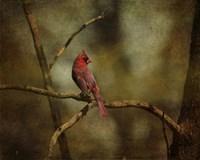 Cardinal On A Branch Fine-Art Print