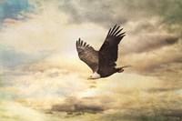 Early Evening Flight Bald Eagle 1 Fine-Art Print