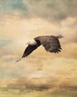 Early Evening Flight Bald Eagle 2 Fine-Art Print