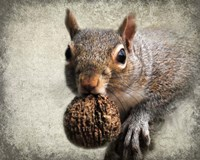 Gray Squirrel With Nut Fine-Art Print