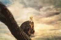 Her Majesty Bald Eagle Fine-Art Print