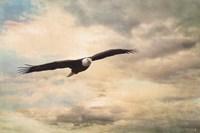 High Flyer Bald Eagle Fine-Art Print