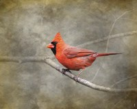 His Red Glory Cardinal Fine-Art Print