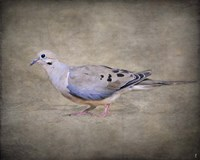 Mourning Dove Portrait Fine-Art Print