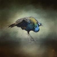 Peacock 10 Fine-Art Print