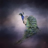 Peacock 11 Fine-Art Print