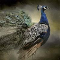 Peacock 5 Fine-Art Print
