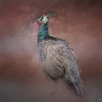 Peacock 7 Fine-Art Print