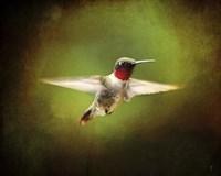 Portrait Of A Hummingbird In Flight Fine-Art Print