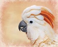 Salmon Crested Cockatoo Portrait 1 Fine-Art Print