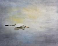 Silent Flight Great White Egret Fine-Art Print