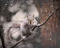 Snow Day Squirrel Fine-Art Print