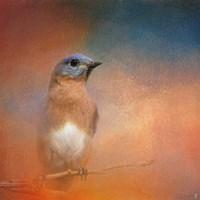 Summer Day Bluebird Fine-Art Print