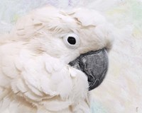 Umbrella Cockatoo Portrait Fine-Art Print