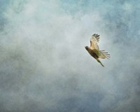 Up Up And Away Red Shouldered Hawk Fine-Art Print