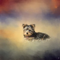 Yorkie Loving The Leaves Fine-Art Print