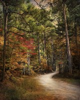 Autumn Forest 2 Fine-Art Print