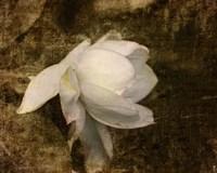 Cape Jasmine Gardenia 1 Fine-Art Print
