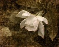 Cape Jasmine Gardenia 2 Fine-Art Print