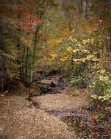 Creek Bed In Autumn Fine-Art Print